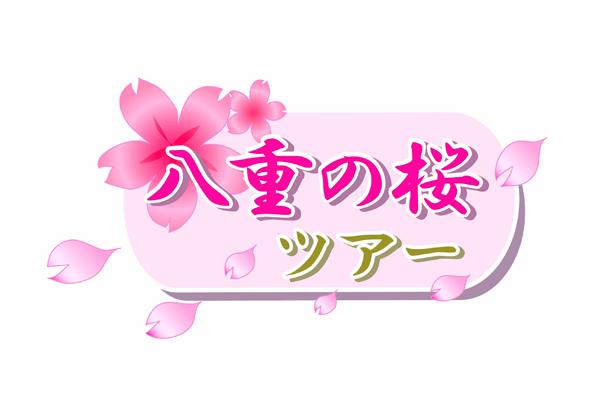 yaenosakura